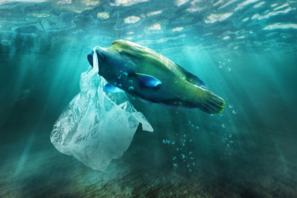 Plastic pollution in sea
